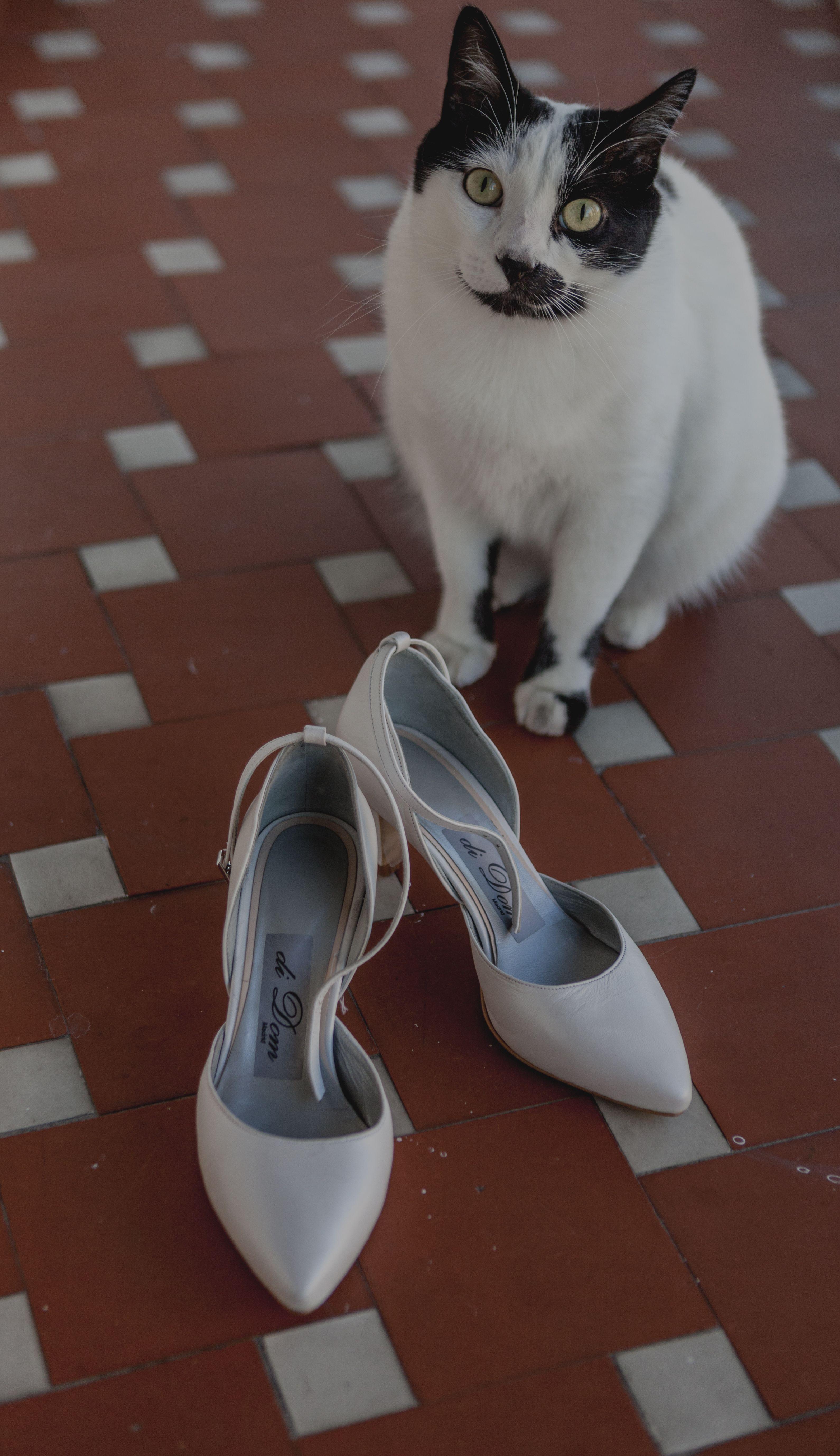 zapatos_novia_gato